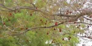 06. Kwiaty drzewa badminton ball.