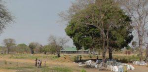 06. Mahoniowiec w centrum misji w Akol Jal, Sudan Południowy.